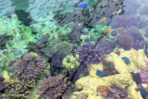 サンゴ畑写真4